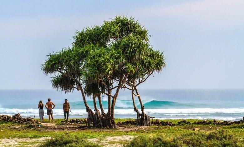 Photo of Volunteering Before Surfing, Meet Ryan – Founder of LOG Rote