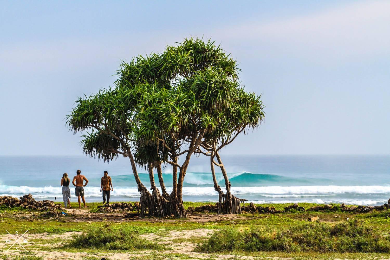 Volunteering Surfing