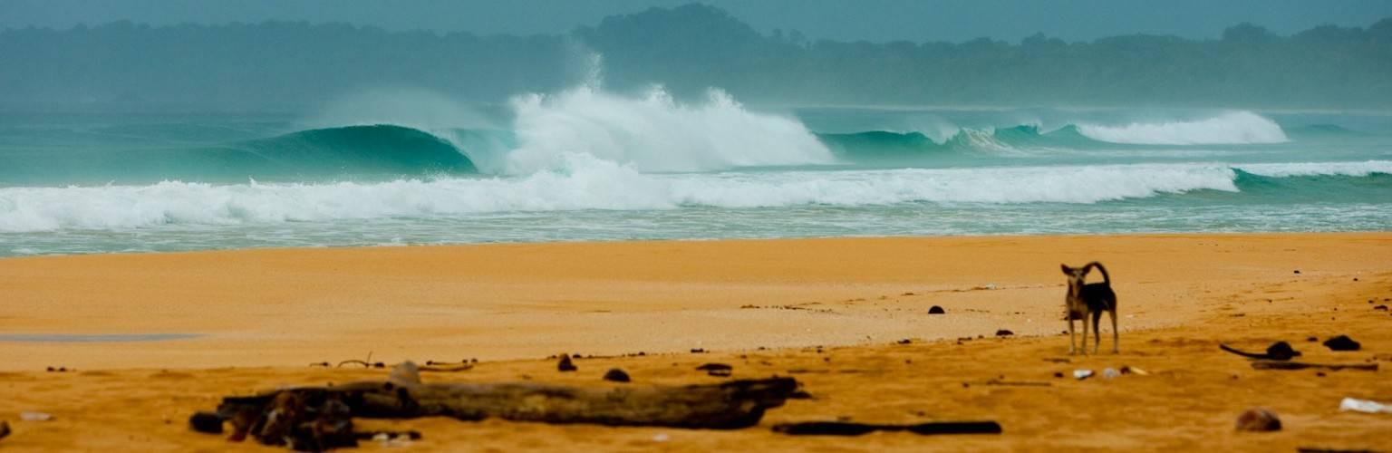 Tele Surfing Village